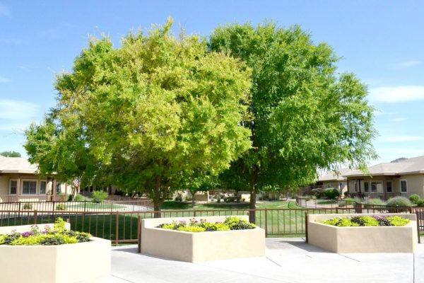 Sunshine Village courtyard and raised flower beds